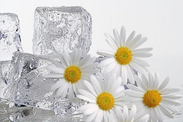 Лед из отваров трав